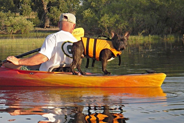 Tips for Kayaking with Dogs