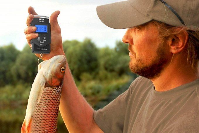How to Buy the Best Digital Fish Scale